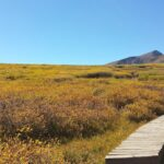 Wood Walking Path-Guanella Pass.