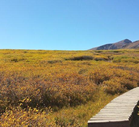 Wood Walking Path-Guanella Pass.