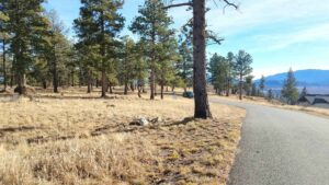Land For Sale - Pine Meadows